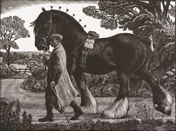 Artist Charles Frederick Tunnicliffe R.A.: The Shire Stallion