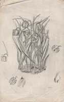 Artist Evelyn Dunbar: Study of Fritillaria meleagris (Snake's Head Fritillary) for page 89 of Gardeners' Choice, 1937 [HMO 214]