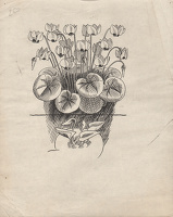 Artist Evelyn Dunbar: Studies of Cyclamen coüm and for C. neapolitanum for page 55 of Gardeners' Choice, 1936 [HMO 260]