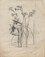 Artist Evelyn Dunbar: Studies of Gladiolus tristis for page 103 of Gardeners' Choice, c.1936 [HMO 36, cat 47]