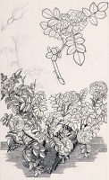Artist Charles Mahoney: Study of Old Roses, the original design for Gardeners Choice, p 157