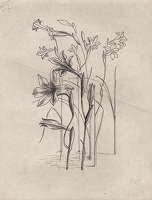 Artist Evelyn Dunbar: Studies of Gladiolus tristis for page 103 of Gardeners' Choice, c.1936 [HMO 36, cat 54]