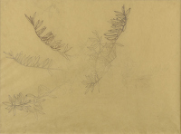Artist Sir Thomas Monnington: Study of Olive leaves, for Allegory , 1924