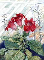 Artist Majorie Hayes: Gloxinias in a greenhouse, 1961