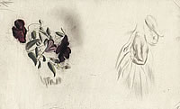 Artist Catherine Olive Moody: Study of Clematis Viticella and closed Hand (seeding?)