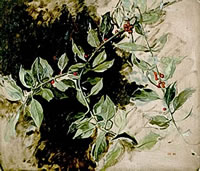 Artist Carolyn Sergeant: A sprig of holly, 1990